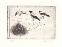 3-krager